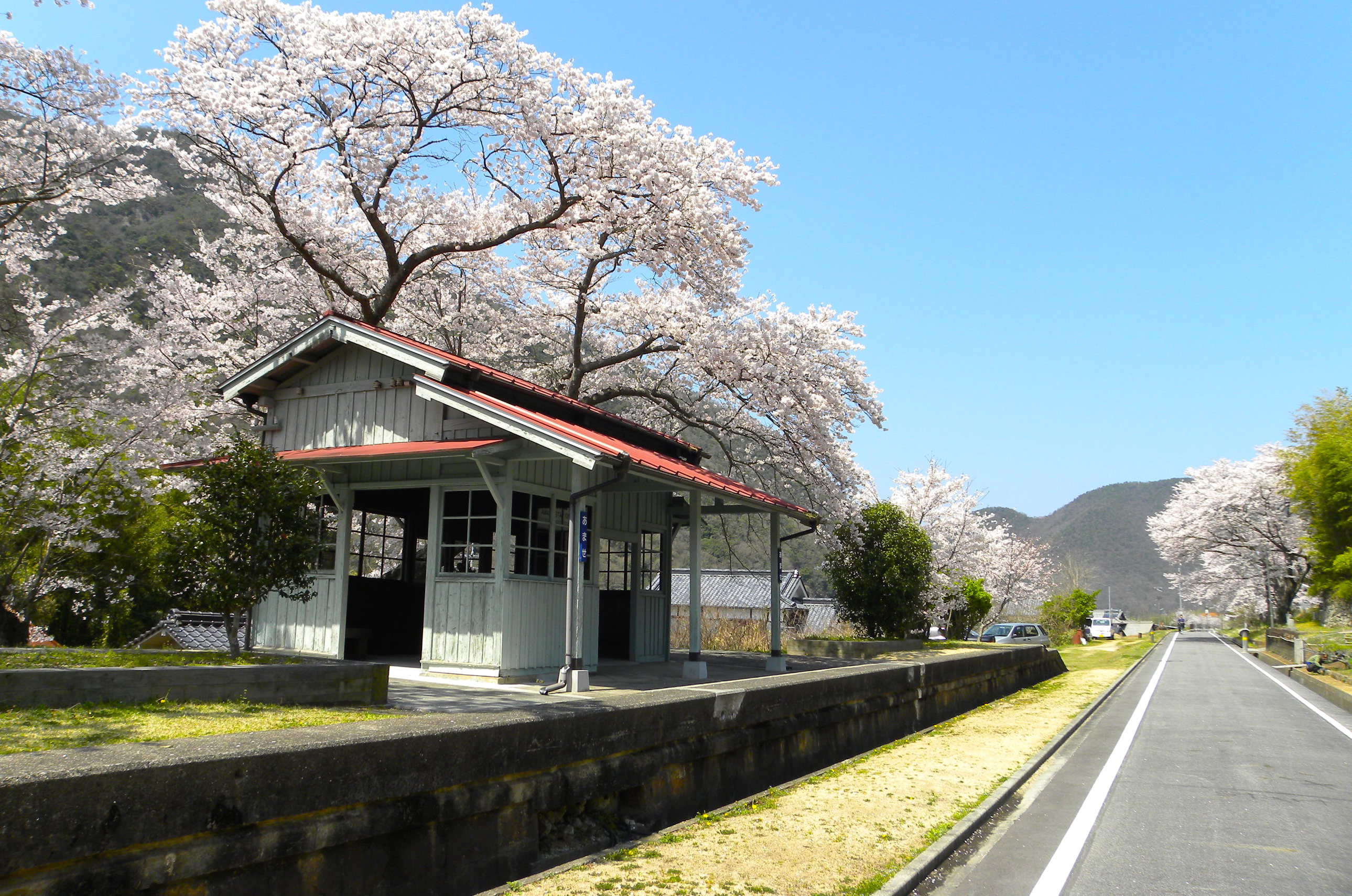 wakesakura
